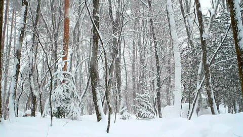Winter snow landscape Stock Video Footage