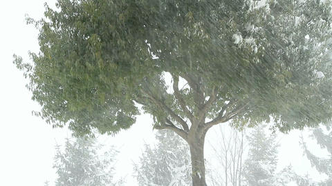 Lonely tree under the strong winter blizzard Footage