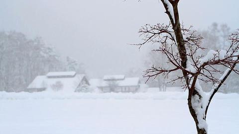 Winter snow landscape Footage