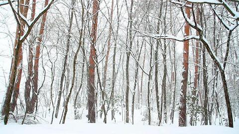 Winter snow landscape Stock Video Footage