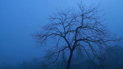 Single Tree In The Fog stock footage