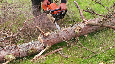 Cut Tree Trunk With Chainsaw stock footage