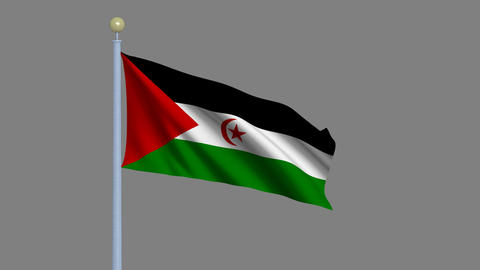 Flag of Western Sahara Stock Video Footage
