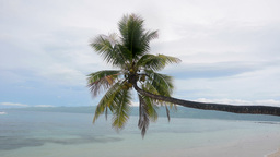 Tropical palm tree over water Stock Video Footage