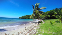 Tropical Beach With Palm Tree Lined Beach stock footage