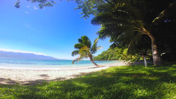 Tropical palm trees against grassy shoreline Stock Video Footage