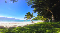 Tropical palm trees against grassy shoreline Footage