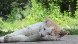 Male cat resting after the fight for his territory Stock Video Footage