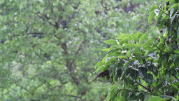 Spring Rain. Weather. With Sound stock footage