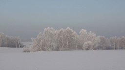 Winter panoramic landscape with snow covered trees Footage
