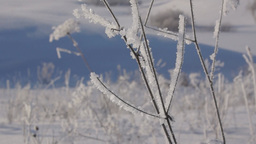 Dry Grass Covered With Hoarfrost stock footage