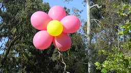 Floating Bunch Of Balloons stock footage