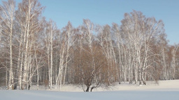 Winter landscape in a birch forest Footage