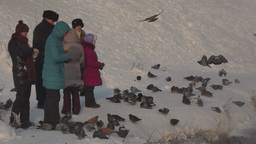 People support wild birds in strong frost by feedi Footage