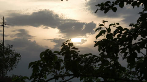 Evening nature scene with trees and sky Footage