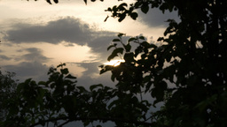Evening nature scene with trees and sky Stock Video Footage