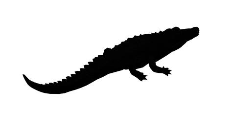 Crocodile swaying body climb crawling,Dangerous animals sketch silhouette Live Action