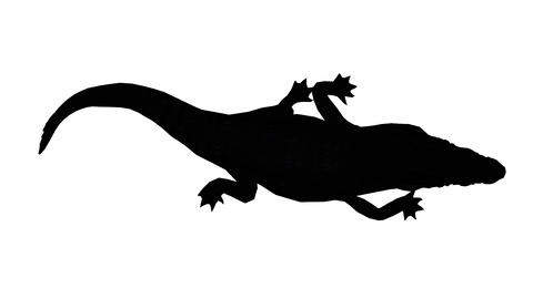 Crocodile swaying body climb crawling,Dangerous animals sketch silhouette Footage