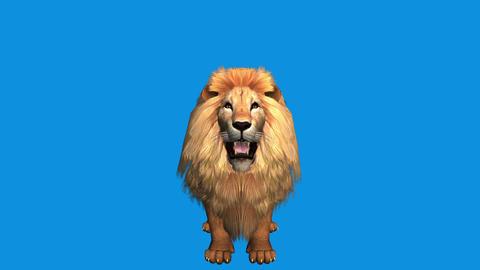Lion howl trumpet,Endangered wild animal wildlife Footage
