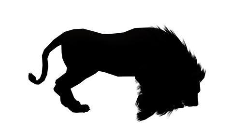 Lion attack bite eating,Endangered wild animal wildlife... Stock Video Footage