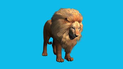 Lion bite eating,Endangered wild animal wildlife Stock Video Footage