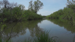 Tranquil summer landscape at the small river Footage