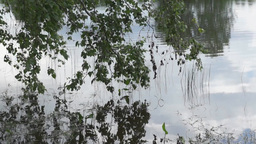 Branches of a birch hang over water Footage