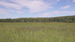 Moving along a summer field road Stock Video Footage