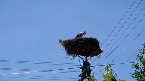 Stork in the nest on telephone pole Footage