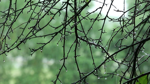 tree branches with water drops in the rain Stock Video Footage