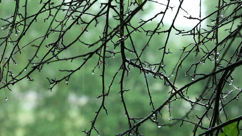 Tree Branches With Water Drops In The Rain stock footage