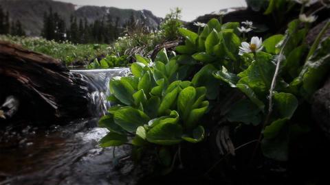 (1210) Colorado Rocky Mountains Alpine Wildflowers Summer... Stock Video Footage