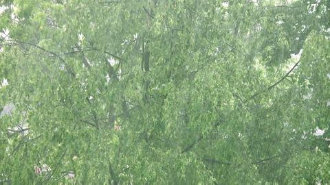 rain and tree Stock Video Footage