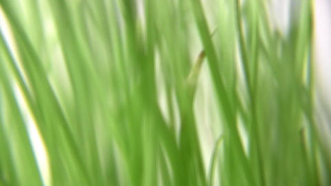 rotating grass Stock Video Footage