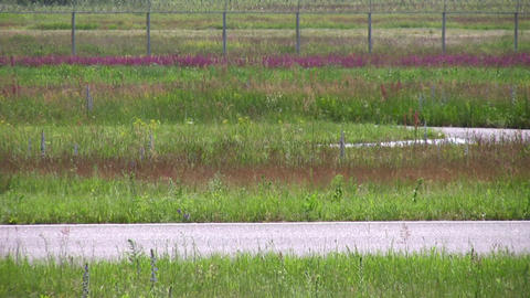 moto contest blur Stock Video Footage