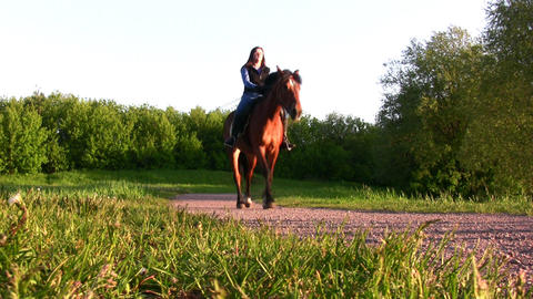 horses and people Stock Video Footage
