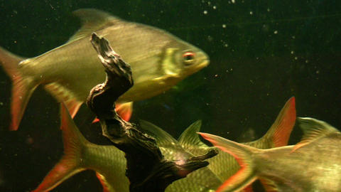 Fish Aquarium stock footage