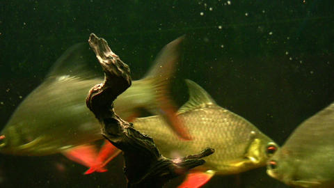 fish aquarium Stock Video Footage