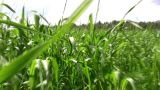Walking In Grass Field stock footage