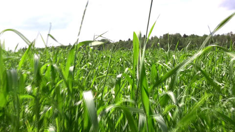 walking in grass field Stock Video Footage