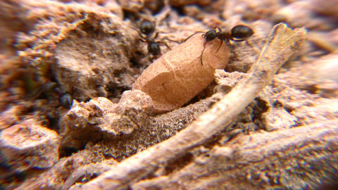 ants Stock Video Footage