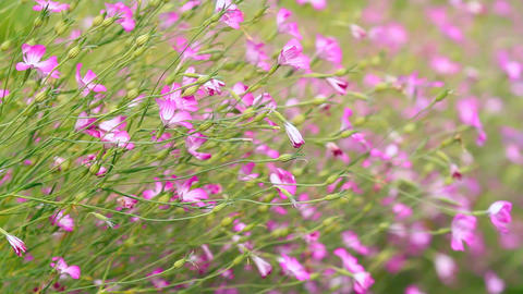 Wild Flowers Swaying In The Wind stock footage