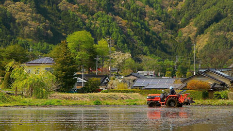 Tractor In A Rice Field stock footage