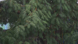 Bad Weather Heavy Rain And Hail stock footage