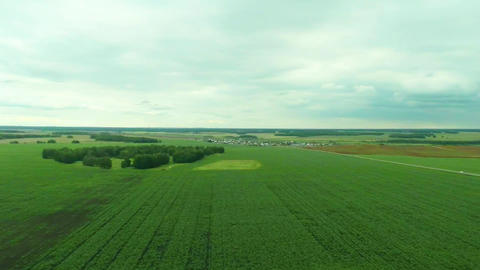 Camera moves over the corn field at a height of 70 Stock Video Footage