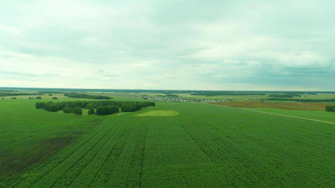 Camera moves over the corn field at a height of 70 Footage