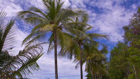 Palm Trees and Clouds. Time Lapse Footage