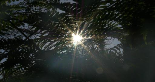 4K, Sunbeams through fern, wee and trees Stock Video Footage