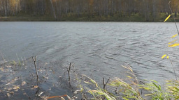 Autumn Landscape At The Shore Of A Pond stock footage