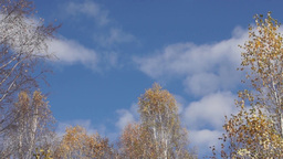 White clouds are floating in the blue autumn s Stock Video Footage